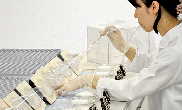 New Insecticide Developed By Sumitomo Chemical & IVCC Moves To Next Evaluation Phase